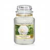 Sviečku Yankee Candle - Camellia Blossom 623 g ponúkame v klasickom, ale zato najobľúbenejšom dizajne so skleneným vekom. Ide o vôňu: kvet kamélie. Doba horenia: 110 - 150 hodín.
